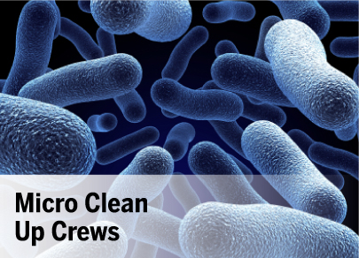 Micro Clean Up Crews